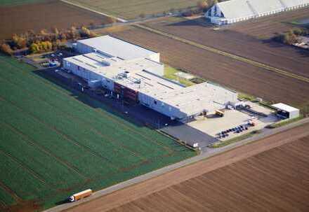 Lager-/Produktions- und Tiefkühlflächen zu vermieten