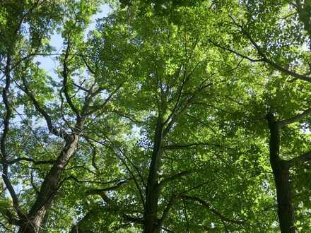 Laubmischwald nord-östlich von Bautzen - 0,4 ha