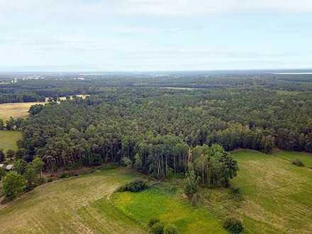 Nachverkauf: 2,3 ha Forstliegenschaft in der Oberlausitz - voll bestockt