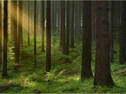 Herrliches Waldgrundstück mit Fichtenbestand