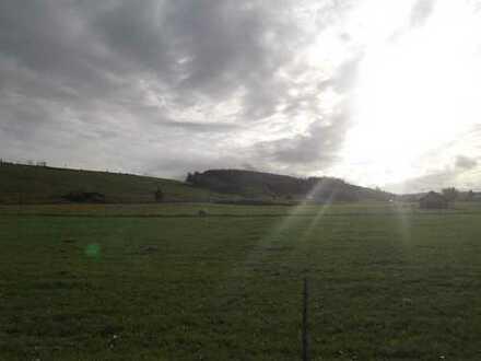 Landwirtschaftliches Grundstück, Wald und Wiese, in der Gemarkung Denklingen