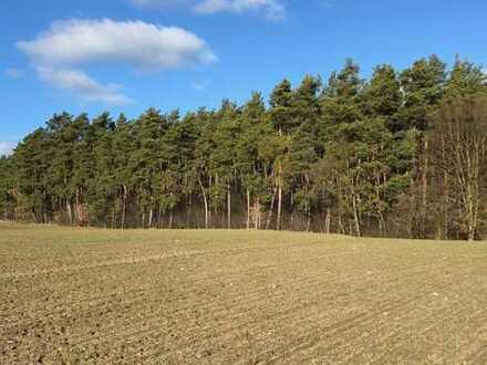 Ackerland, Waldfläche zu verkaufen in Lychen