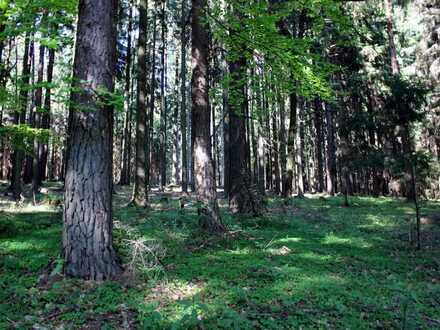 arrondierter Waldbesitz - südlich von Prag