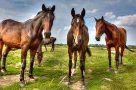 Pferdekoppel in bester Lage zu verkaufen