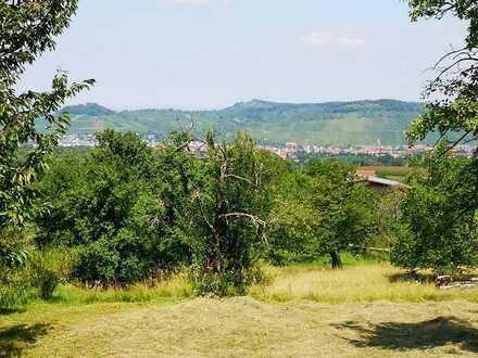 NATUR & Boden | Wiesenfläche | Obstbaumwiese als KAPiTALANLAGE