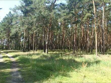 Viel Wald mit Lagermöglichkeiten