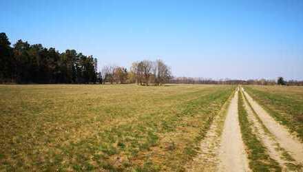 10 ha Ackerland und 1 ha Grünland bei Kleinzerlang - Ostprignitz-Ruppin -