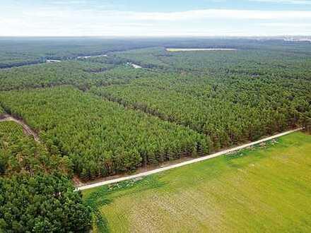 AUKTION: 1,5 ha Forstliegenschaft