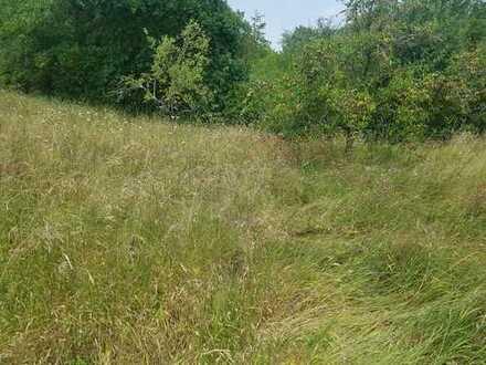 Wald-Gartengrundstück/ Privatverkauf