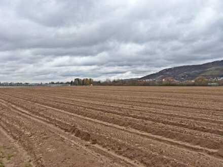 Ackerflächen in 64625 Bensheim-Auerbach