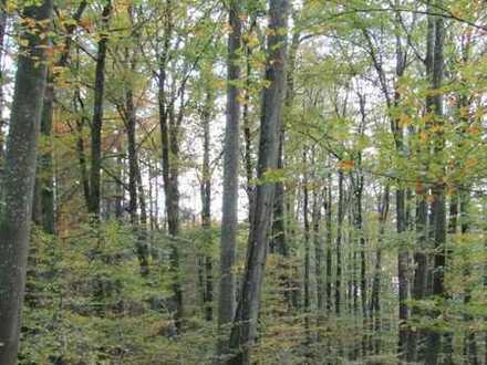 **Waldgrundstück im Rheinhölzle von Büsingen zu verkaufen**
