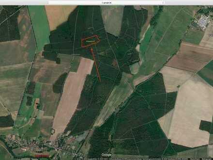 1,72 ha. Wald bei Briescht (Tauche)