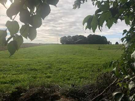 Landwirtschaftliche Fläche/Grünland