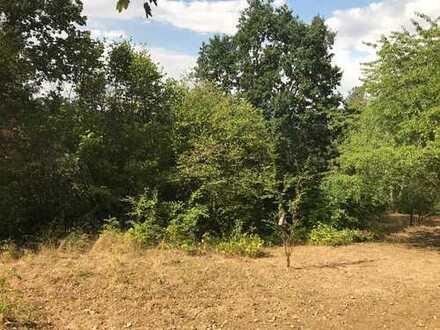 Über 2.000 m² großes Grundstück für EFH nahe Zwickau in ruhiger Lage, positiver Bauvorbescheid 2018