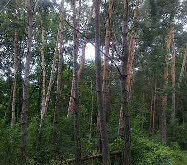 Wald in Wernsdorf bei Berlin