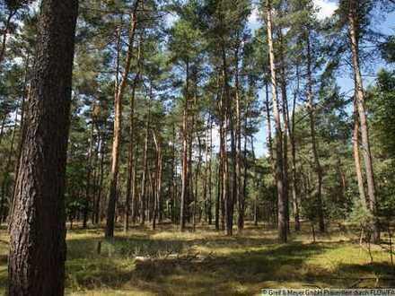 Großes Forst- und Jagdgut in der Schorfheide