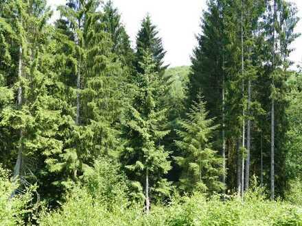 Forstfläche MK 1,6 ha Raum Plettenberg-Bremcke