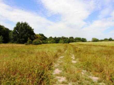 Ackerlandflächen in Hagenbach zu verkaufen