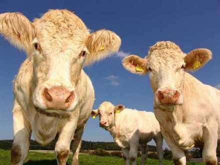2,7626 ha landwirtschaftliche Flächen in Hagermarsch