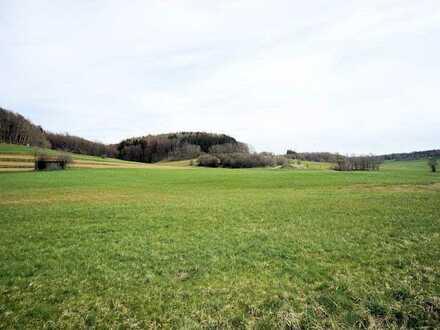 *** Wiese - Gemarkung Dietershofen bei Babenhausen ***