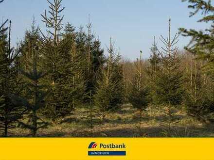 Waldfläche/Waldgrundstück als Kapitalanalge oder als Hobbygrundstück.