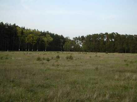 Ruhiges Baugrundstück in Waldnähe