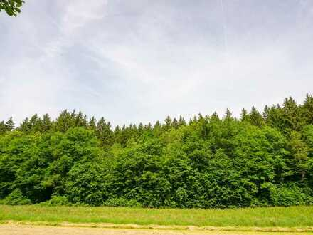 Jetzt schon an den Winter denken - Waldfläche in Plankenfels