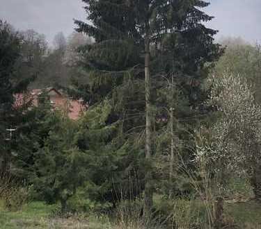 Neubau Doppelhaushälfte am Bachlauf