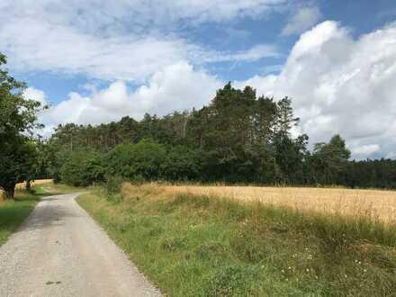 Sonniges und naturbelassenes Waldgrundstück mit Weitblick