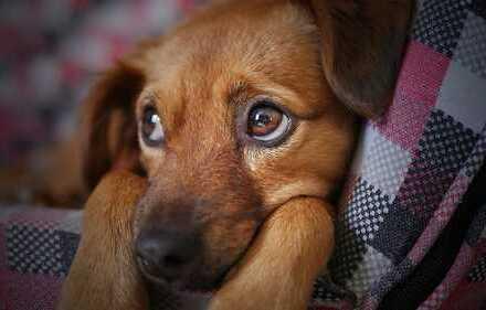 Hier wird Ihr Haustier nicht abgewiesen!