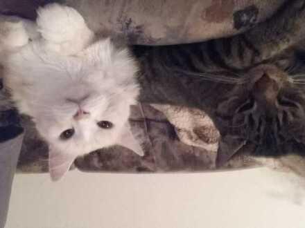 Ich und 2 Katzen suchen WG Zimmer