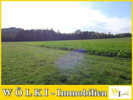 - - Landwirtschaftliches Grundstück - - auch für Ausgleichsflächen!