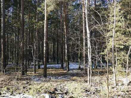 AUKTION - Vertragsfreie Waldflächen