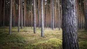 Sechs Waldgrundstücke in Bad Belzig