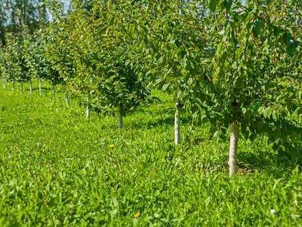 1200 m² Freizeitfläche mit Apfelbäumen - KEIN BAULAND - 82386 Oberhausen