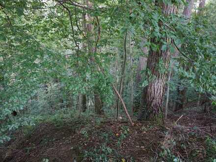 Waldgrundstück, Innleite direkt an der Stadtgrenze Wasserburg am Inn