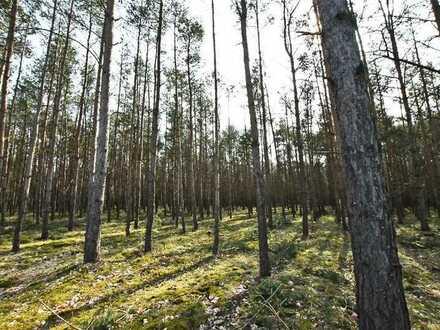 4. LIVE-AUKTION 2021: Kleine Waldfläche im südlichen Brandenburg