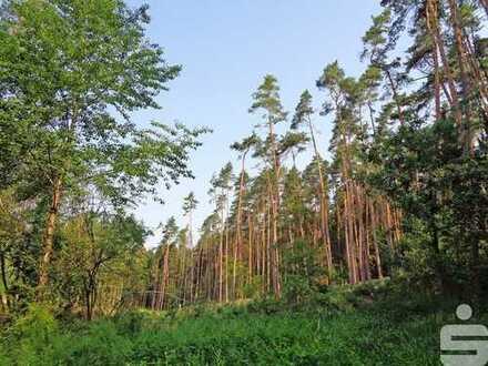 Gut erreichbares und anfahrbares Waldgrundstück