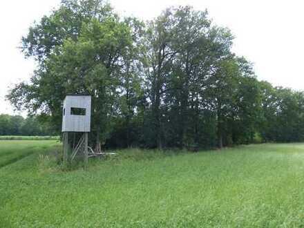 Attraktive Waldfläche in Südlohn zu verkaufen!