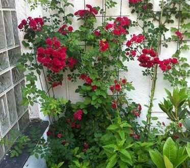 sehr schöne ruhige 3 Zimmerwohnung mit Garten,kl. Teich, beheizten Wintergarten,Terrasse,Gartenhaus