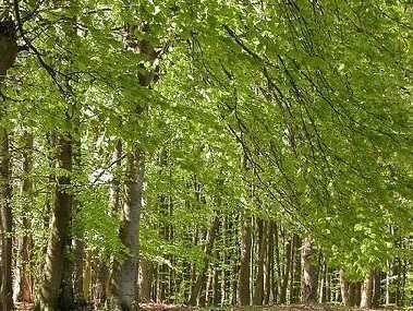 Forstfläche auf Rügen