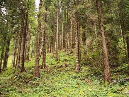 Waldgrundstücke im Süden von Kochel