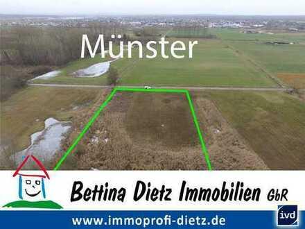 DIETZ: Landwirtschaftsfläche mit 4320 qm Fläche zwischen Münster und Hergershausen