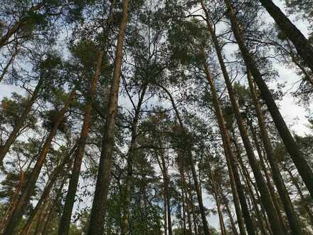 28145 m² Wald mit Kiefern, Fichten, Lärchen in Oberbarnim zu verkaufen