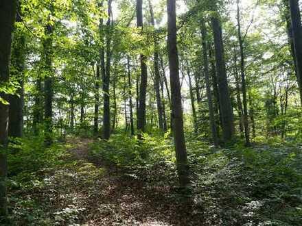 Waldverkauf Gemarkung Dannheim (Stadt Arnstadt)
