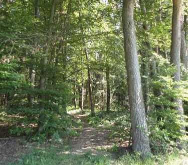 Wald bei Schrobenhausen