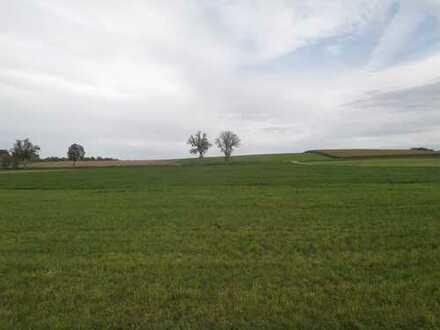 Wiese in der Gemarkung Dettenhofen