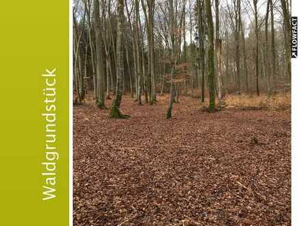 Großes Waldgrundstück mit schönem Buchen-Baumbestand in Weßling