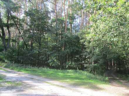 Waldflächen überwiegend Kiefernbesta; Mindestgebot: 64.000€; weitere Einzelheiten: siehe Exposee!