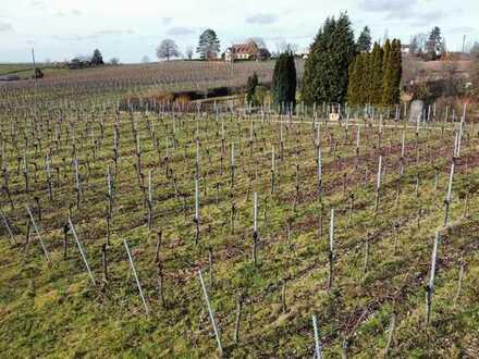Garten/Weinanbauland in bevorzugter Lage am Gaffenberg